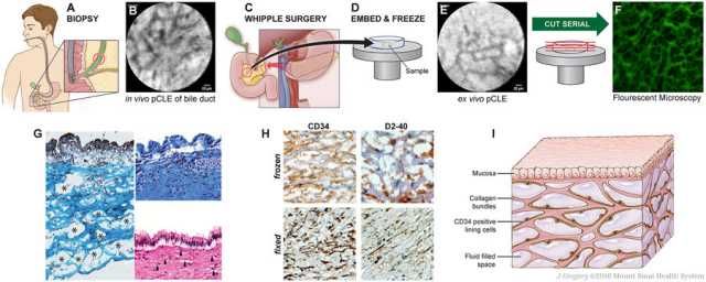 Representações do Órgão durante a investigação