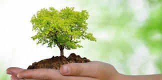 O Crescimento Verde, Um Desafio à Escala Global