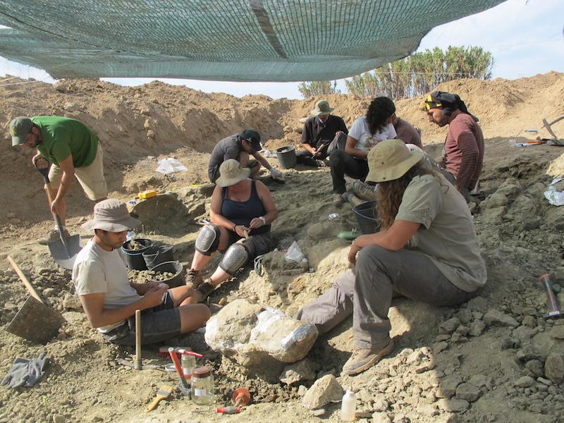 Equipa internacional escava dinossauros em Torres Vedras