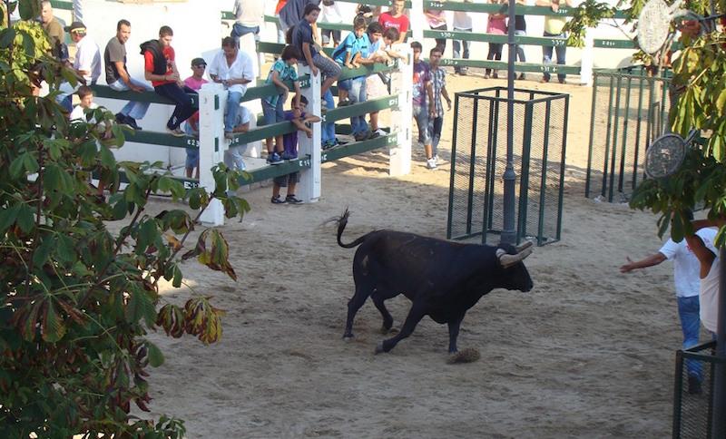 Festa e Feira de Verão em Sobral de Monte Agraço