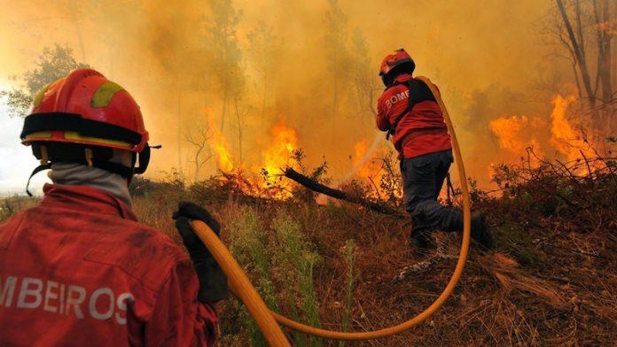 Dominado incêndio que consome mato e floresta na Lourinhã
