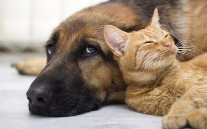 Municípios do Oeste querem criar projeto intermunicipal de recolha de animais