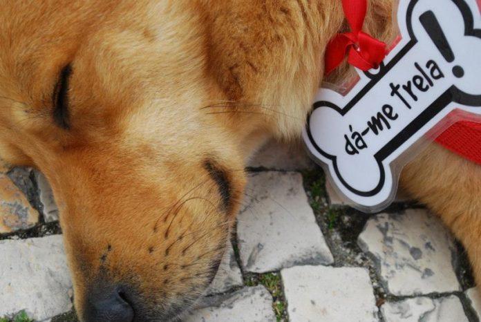 Campanha de adoção de animais 2016: Dá-me Trela!