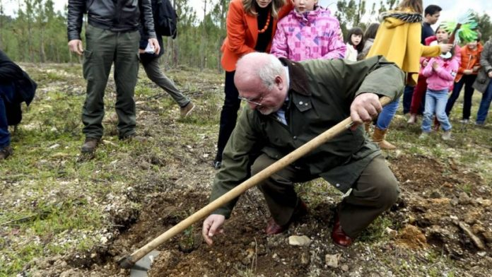 Governo quer recuperar 150 mil hectares de floresta na próxima década