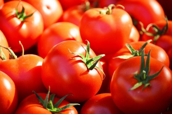 Horticultor testa produção de tomate em estufas aquecidas a biomassa