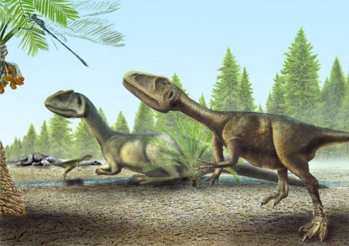 Novo exemplar de um pequeno dinossauro carnívoro nas coleções da Sociedade de História Natural
