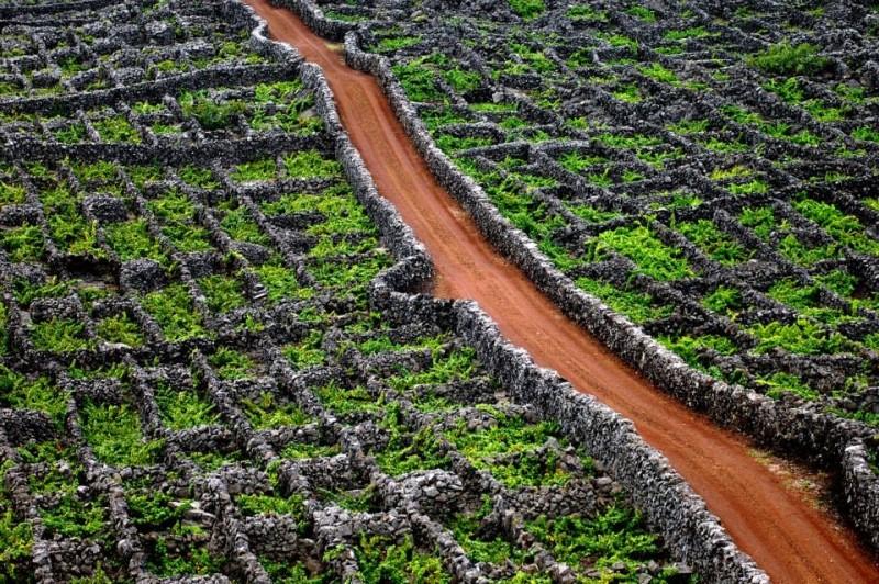 Madalena do Pico será a Cidade do Vinho 2017