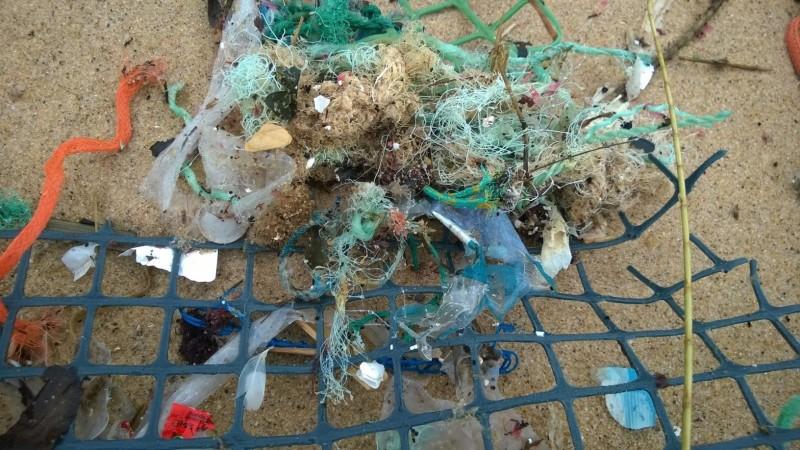 Programa de monitorização do lixo marinho em praias prossegue