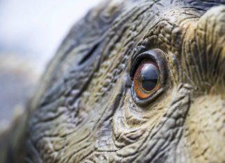 Dinossauros no Arena Shopping