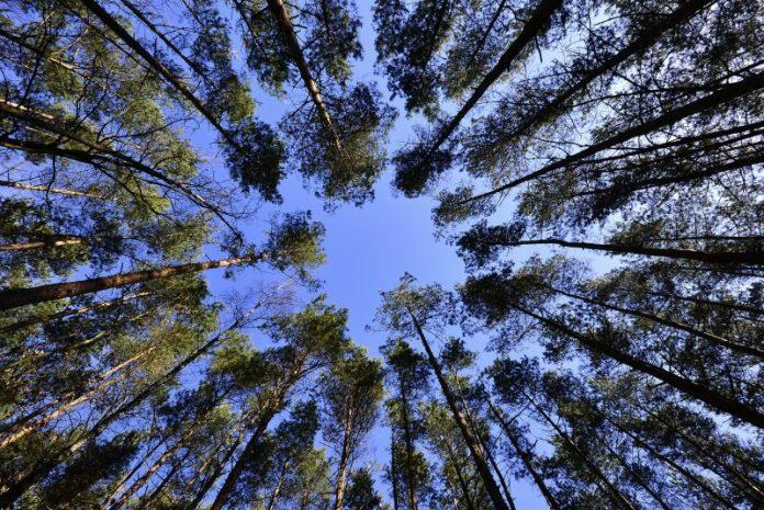 Abertura de concurso para medidas florestais