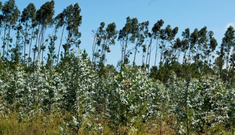 Distribuição das espécies florestais no Concelho de Torres Vedras