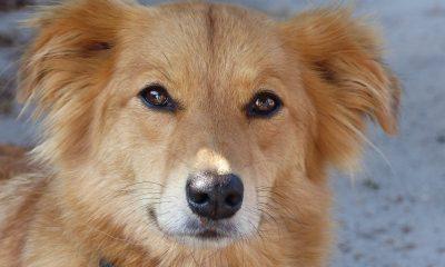 Exposição canina em Torres Vedras