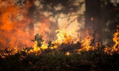 31 mortos confirmados nos incêndios deste fim de semana