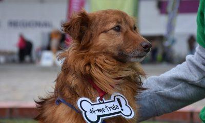 Dia do Cão, dia 25 de Novembro - Campanha de adoção em Torres Vedras
