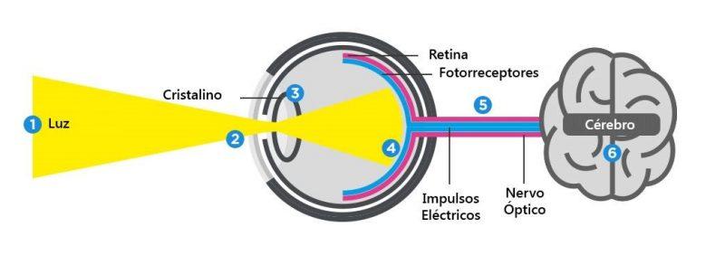 como funciona olhos