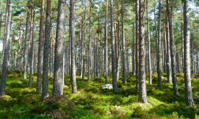 Açoes esclarecimento sobre limpeza de terrenos florestais