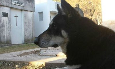 Cão guarda túmulo do dono por 10 anos até morrer