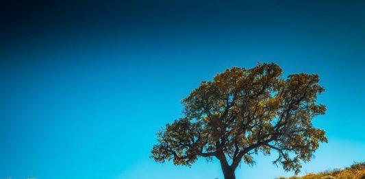 Dia da árvore em Torres Vedras