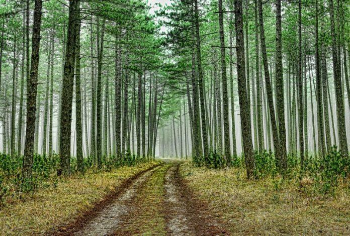 Limpeza de Terrenos - Sessões esclarecimento