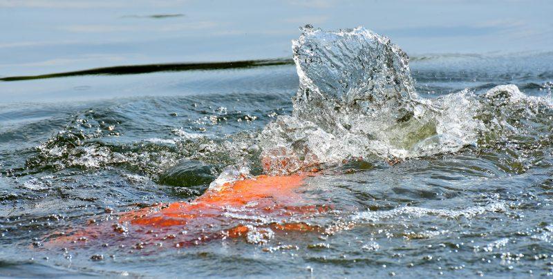 """Peixes de água doce para """"ouvir e ver"""" a 14 de Abril"""