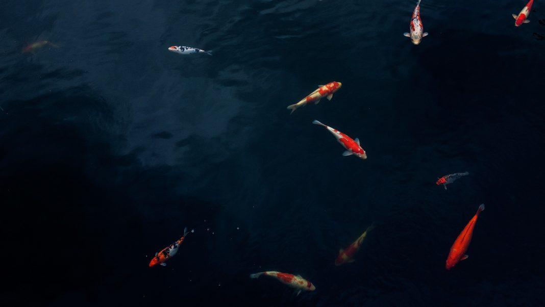 Biólogos estudam rios do litoral oeste, com espécies de peixes em via de extinção