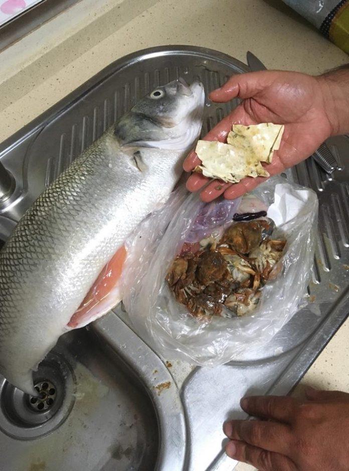 Torriense encontra plástico dentro do estômago de um peixe que pescou