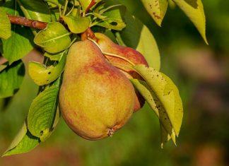 Governo lembra que seguros cobrem danos na agricultura provocados pelo calor