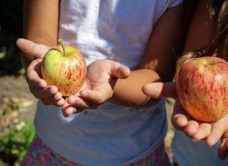 Regime de fruta escolar alargado ao Jardins de Infância