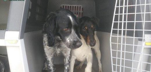 GNR recupera dois cães furtados em Loures e Rio Maior