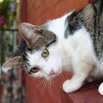 Sobral de Monte Agraço com esterilizações gratuitas de animais para carenciados
