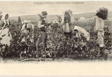 A identidade europeia do vinho em exposição