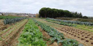 """Ciclo de seminários """"Dieta Mediterrânica e Bio-Regiões"""" vai decorrer em Torres Vedras"""
