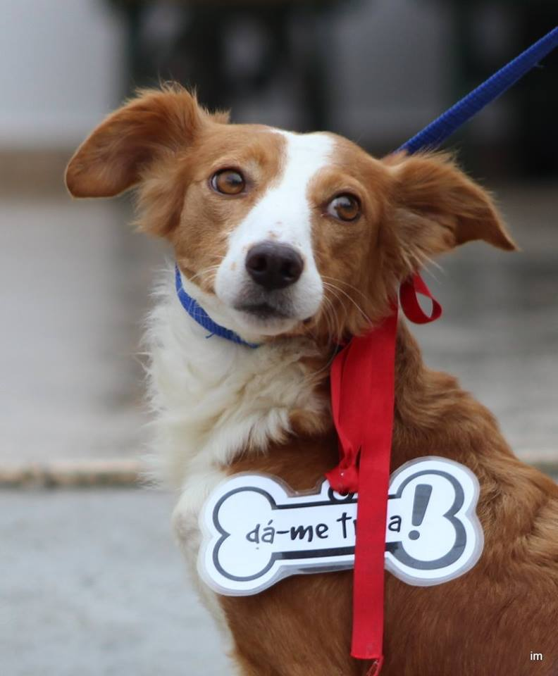 Canil Municipal entregou cerca de 180 cães este ano