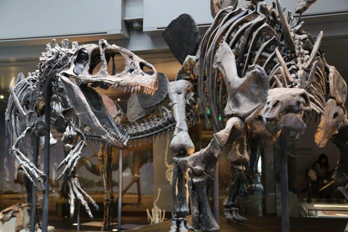 Cidadãos de todo o país financiam investigações sobre dinossauros na Lourinhã