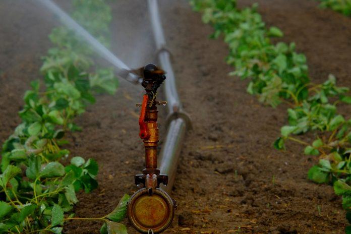 Agricultores alertam para problemas de água que poderão resolver-se no Tejo