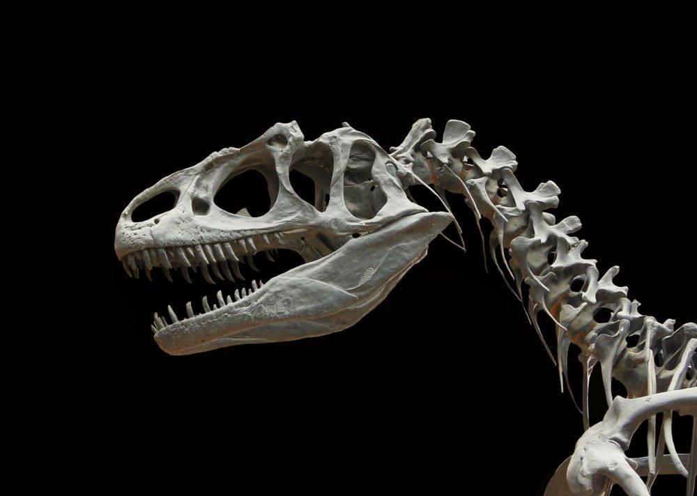 Torres Vedras com obras para abrir exposição permanente sobre dinossauros