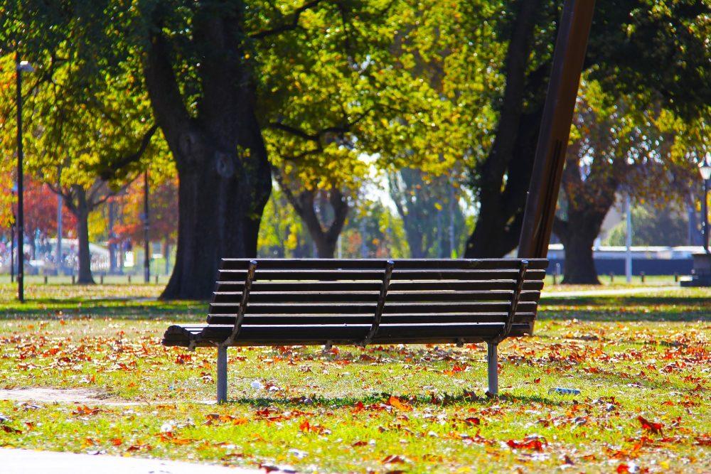 Câmara Municipal tem em preparação um Plano de Rearborização da Cidade