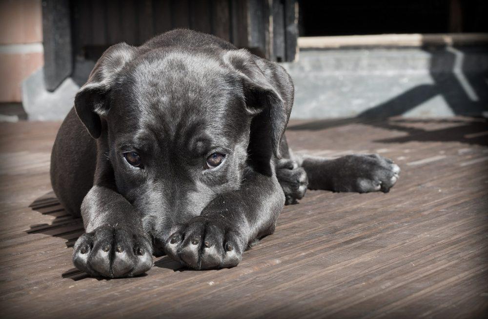 Dia do Cão regressa ao Canil Municipal de Torres Vedras