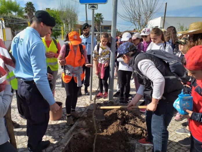 Dia da Árvore foi comemorado em Torres Vedras com vários dias de atividades