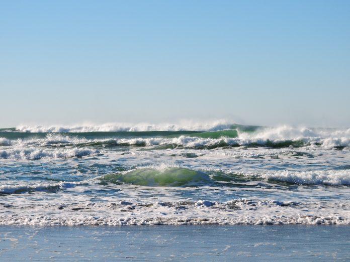 Plataforma para ajudar a reflorestar oceanos vai testar métodos na costa portuguesa
