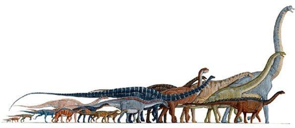 Revelada nova espécie de dinossauro saurópode na Lourinhã