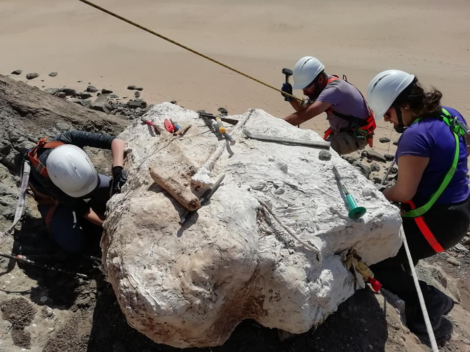 Paleontólogos escavam quarto ninho de dinossauro na Lourinhã
