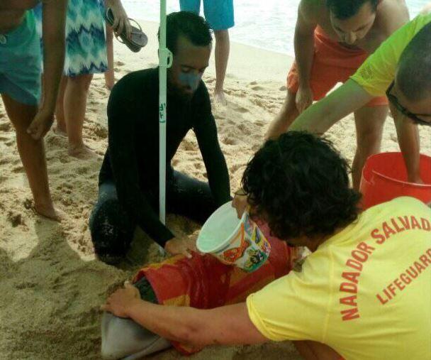 Mais um golfinho que deu à costa na Praia de Santa Cruz