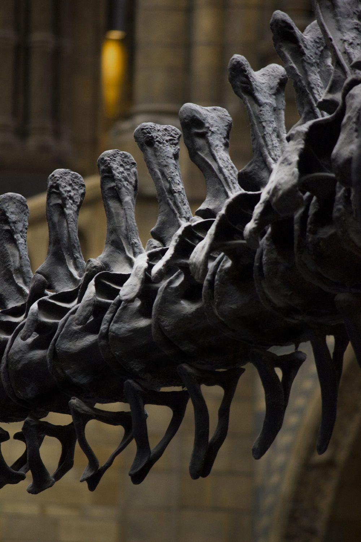 LOURINHÃ: Parque dos Dinossauros atingiu meio milhão de visitantes