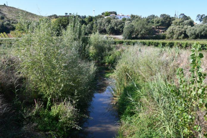 Vários troços dos rios Alcabrichel e Sizandro foram requalificados