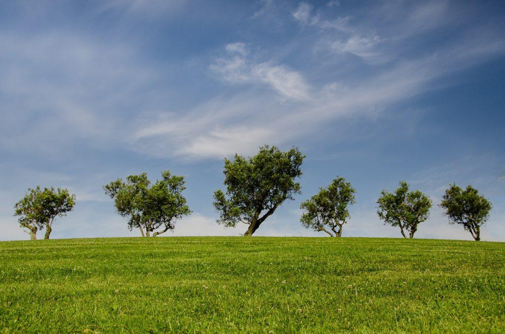 Câmara Municipal vai proceder à remoção e poda de árvores