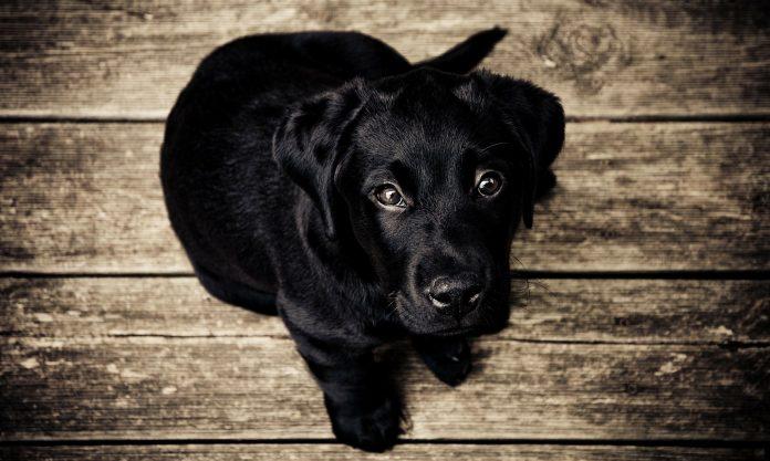 Alenquer: GNR recupera cão perdido