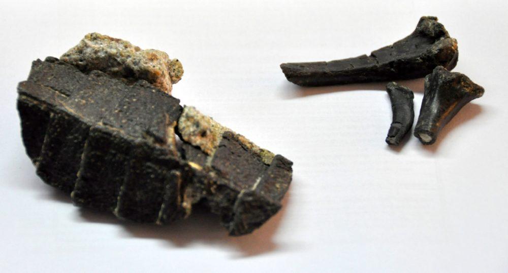 Pequeno esqueleto do Jurássico da Lourinhã mostra a evolução da couraça dos crocodilos