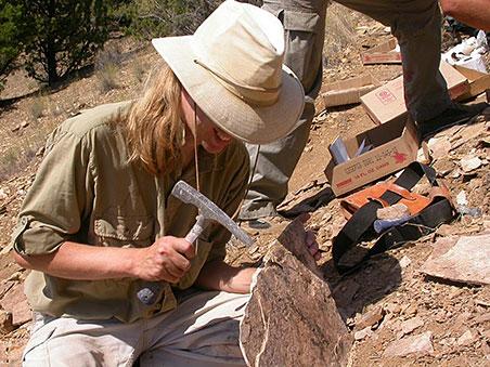 Paleontólogos reclassificam dinossauro americano com base em espécie portuguesa