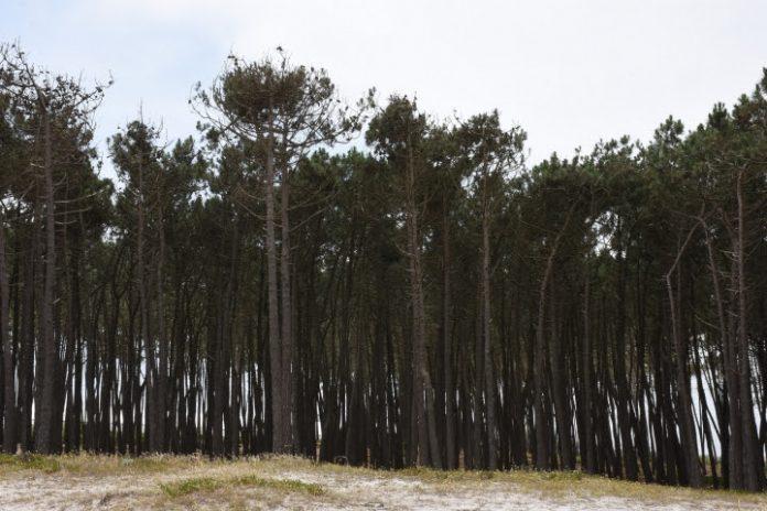 Torres Vedras aderiu a certificado de gestão florestal sustentável